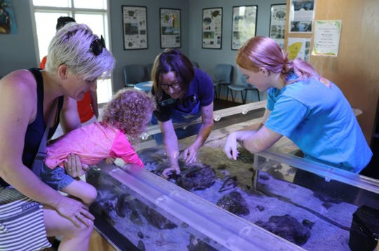 A volunteer at the Environmental Learning Center shows visitors one of the critters in the 145-gallon touch Tank in the Discovery Station interactive museum.