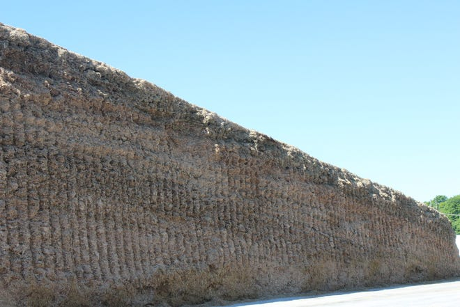 Maximizing nutrient digestibility of corn silage is just one of several dairy forage seminars that will be held virtually on the new World Forage Analysis Superbowl YouTube channel this year.