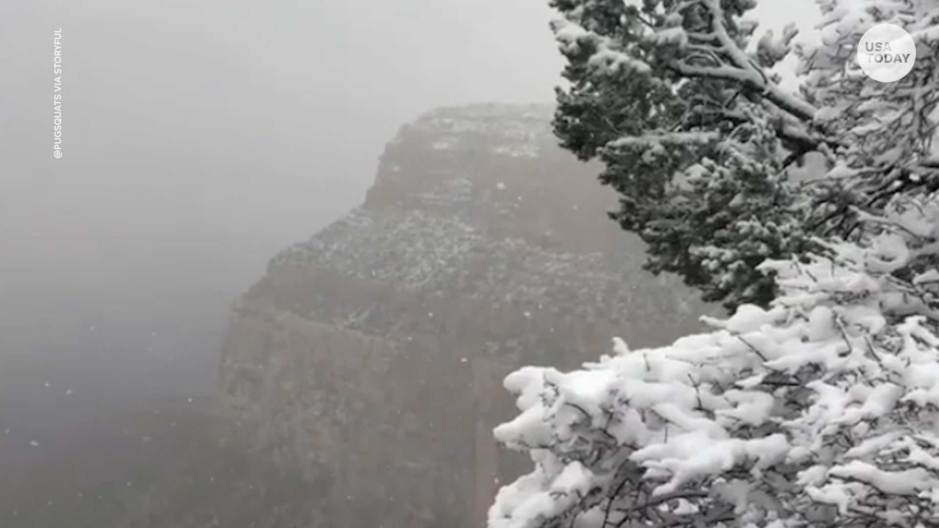 Several Inches Of Snow Dusts Trees Rocks In Grand Canyon