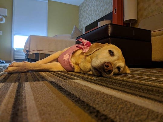 If a Home 2 Suites guest adopts at anytime during their stay, their new fur child can move into their hotel room until they check out.