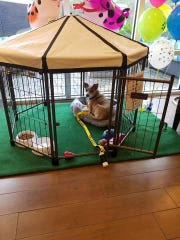 """Each dog chosen to participate in the Home 2 Suites """"Fostering Hope"""" program lives in the lobby in  a large kennel with a window view."""