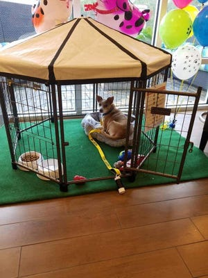 "Each dog chosen to participate in the Home 2 Suites ""Fostering Hope"" program lives in the lobby in  a large kennel with a window view."