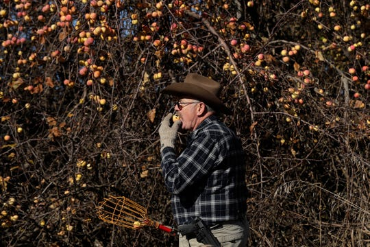 In this Oct. 29, 2019, photo, amateur botanist E.J. Brandt, of The Lost Apple Project, bites into an apple he picked from a tree in an orchard near Troy, Idaho.