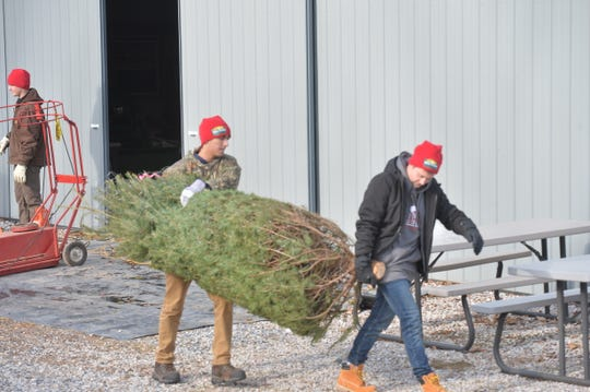 Springfield Tree Farm is short on supply this year but is holding steady on prices in a county where residents carefully watch their spending.