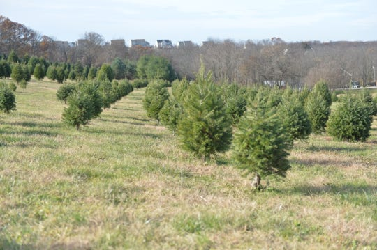 Springfield Tree Farm in York County said they are seeing supply shortages but decided not to raise prices on trees. Low supply and high demand is driving up prices on real trees all around the country this year.