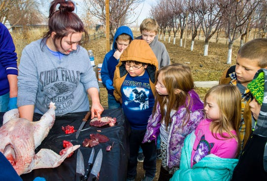 Haylee Horton identifies turkey organs to Smith Valley elementary school students.