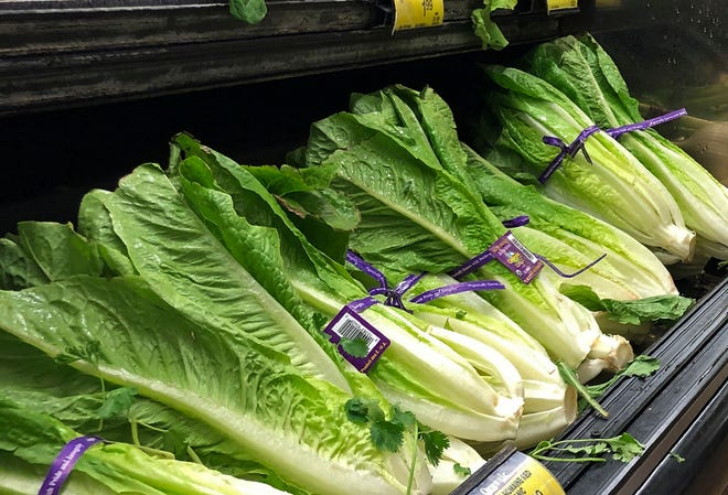 FILE - This Nov. 20, 2018 file photo shows Romaine Lettuce in Simi Valley, Calif.  U.S. health officials are telling people to avoid romaine lettuce grown in Salinas, Calif., Friday, Nov. 22, 2019,  as they investigate a food poisoning outbreak. They also say not to eat the leafy green if the label doesn't say where it was grown.