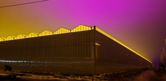 Light from the roof of Nature Fresh Farms near Leamington, Ontario, adds a yellow glow to the pink sky. Detroit area skywatchers some 35 miles away are seeing bright lights high in the sky from Canada.