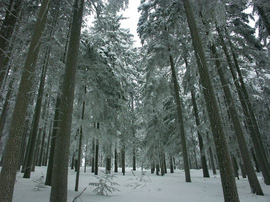 A forest in the winter.