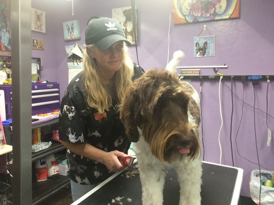 Lisa Martin works her magic on her grooming job.