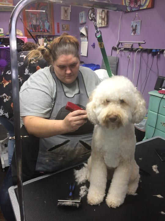 "Another ""doodle"" gets a grooming treatment from Laura Mullins."