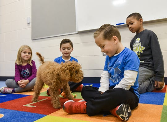 Students at Donley Elementary School in East Lansing meet the school's new 'mascot' Friday, Nov. 22, 2019.   She is a four-month-old Miniature Goldendoodle therapy dog in training.  Students will on a name next week.  The dog will stay with handler Kathy Wilson, a fourth-grade teacher at the school.