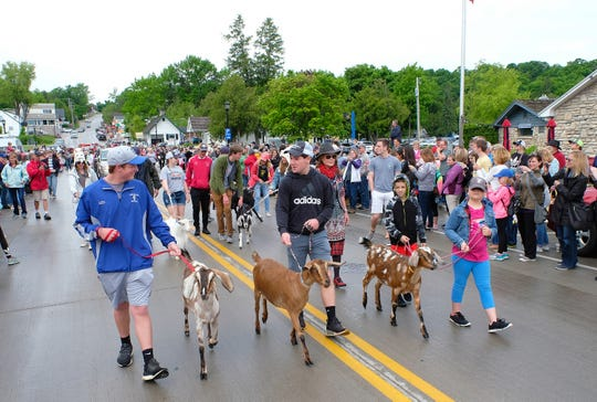 Goats are the star of the Roofing of the Goats Parade in Sister Bay in June.