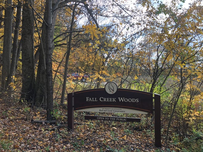 Join Red-tail Land Conservancy at Fall Creek Woods on Black Friday, Nov. 29, 2019, at 1 p.m.
