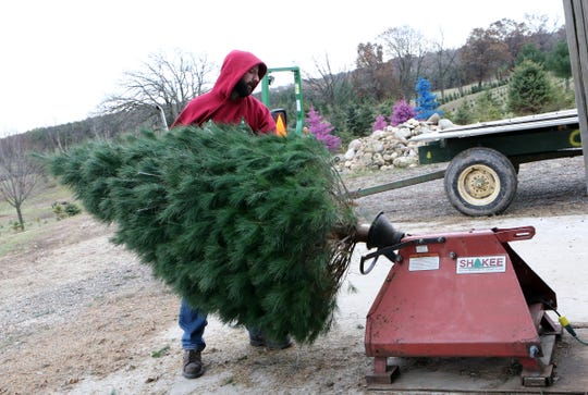 Alex VanDreser, of Delevan, shakes a tree for a customer at Country Side Trees in Walworth on Nov. 24.