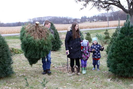 The Davis family, of Sharon, from left, Steven, Leah, Maddie and Kenzie, carry their Christmas tree through Country Side Trees, in Walworth, on Nov. 24.