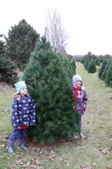 Kenzie Davis, left, 5, and her sister Maddie, 6, pose for a photo next to the tree they picked as their Christmas tree at Country Side Trees in Walworth on Nov. 24.