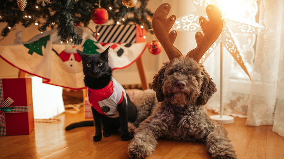Black Friday 2019: Best PetSmart, Petco, and Chewy Black Friday deals