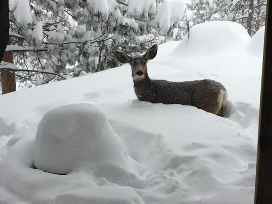 In this reader submitted photo, Charissa Kamigaki shares wildlife seen at her father-in laws house at Carter lake.