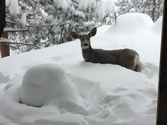 Deep snow can make it challenging for wildlife to find food.