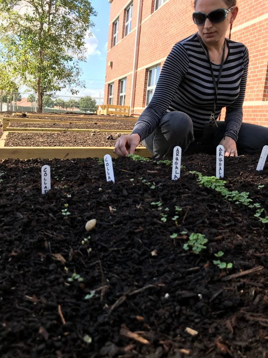 STEM (science, technology, engineering and math) teacher Christol Smith checks out the first sprouts to pop out of a transplant bed in Paul Laurence Dunbar Middle School's garden. She is helping students transform the space into an outdoor lab that will double as a way to feed the hungry.