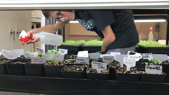 Trafalgar Middle School student Tyler Tietjnes, 13, sprays the microgreens growing in the school's portable.