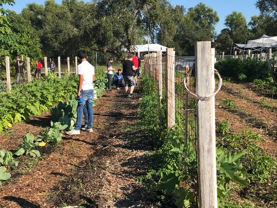 Students in one of Alvin Piotter's farm-to-table classes weed through the garden at Trafalgar Middle School.