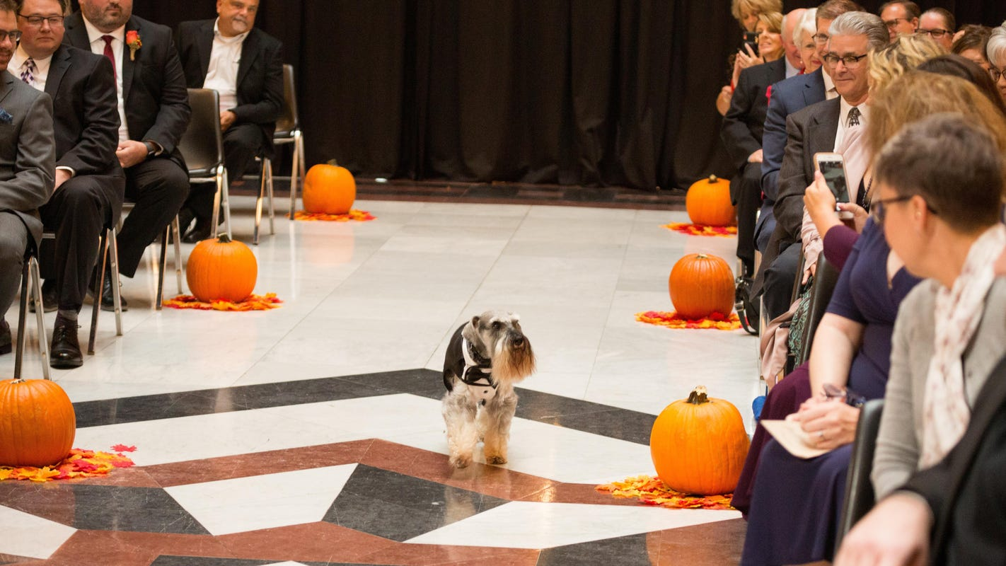 First dog Henry the schnauzer trots down the aisle at happy couple's Statehouse wedding