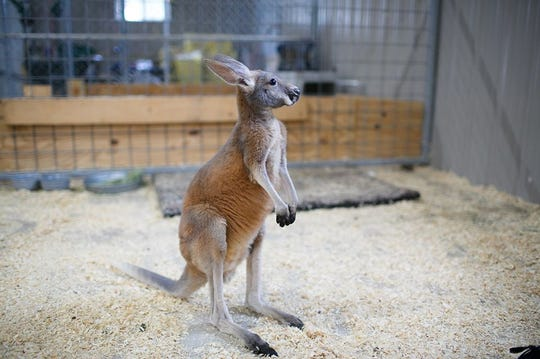 Wilstem Wildlife Park offers encounters with giraffes, grizzly bears, lemurs and a variety of marsupials this winter.