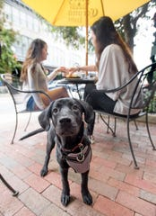 Tito hangs out as his owner Jessica Killian, left, and Brooke Paulk dine along Palafox Place in downtown Pensacola on Tuesday.