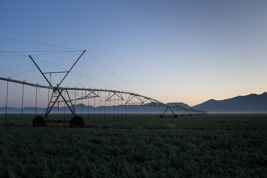 A center-pivot irrigation system in an alfalfa field is seen at Wagon Wheel Farms, Kansas Settlement.