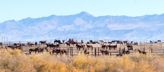 Wild horses and burrows enter the adoption program at the Indian Lakes Wild Horse and Burro Off-Range Corral in Fallon or are sent to pastures throughout the United States.