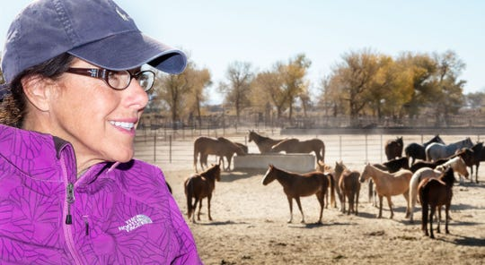 "Carol Nicholson of Reno searches the hundreds of mustangs for the next member of her ""menagerie."" Nicholson has already adopted four mustangs and a baby burro."