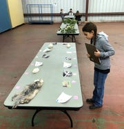 4-H member, Gabby Giles, competes in the Wildlife Ecology Contest, where she won 1st Place in the Junior Division.