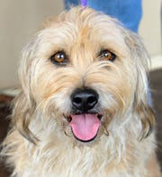 Meet 4-year-old Aston. She is a Terrier/Mix that is looking for her fur-ever home. She gets along with everybody, good with kids and other dogs. You can find Aston and all of her doggy friends at the Wichita County Humane Society.