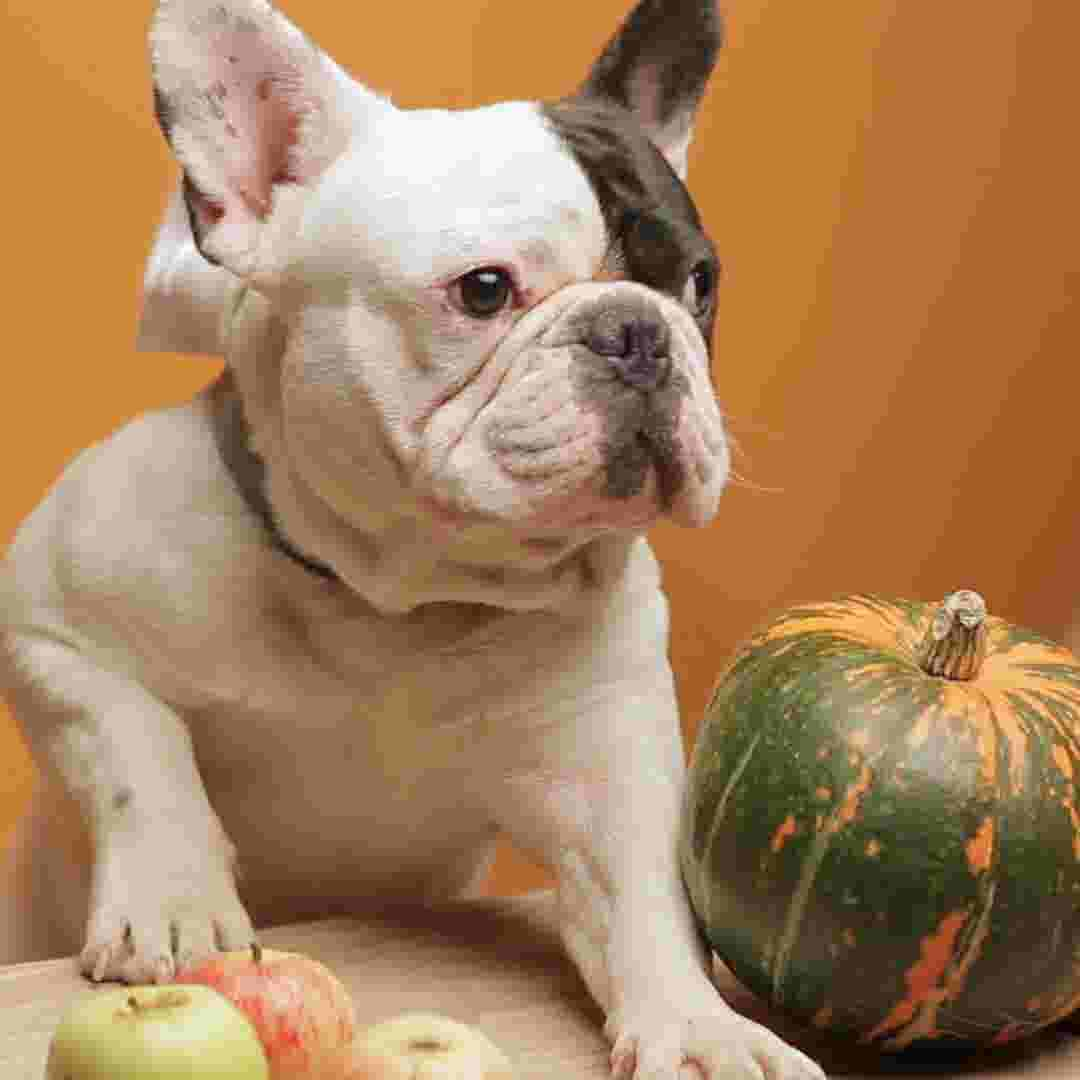Thanksgiving Dogs Should Keep Paws Off These Items Over The