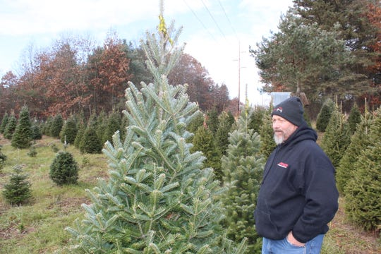 Terry Roach said that it can take 7-15 years for a tree to get tall enough to be a Christmas tree.