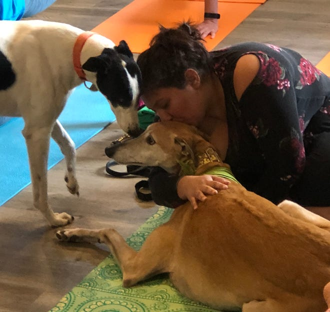 Greyhound Friends of NJ is hosting a Doggy Noses & Yoga Poses class at Lone Eagle Brewing in Flemington on Sunday, Dec.8.