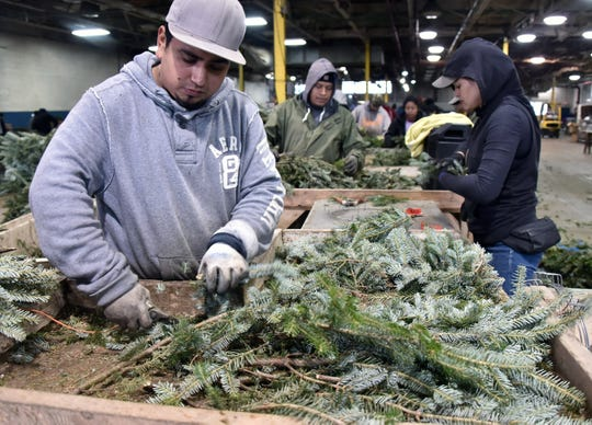 Dutchman Tree Farms also offer wreaths, seen being pieced together by Martin Maldonado, left, and Elizabeth Serrano.