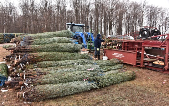 Dutchman Tree Farms has been planting more trees every year. The growth trend in the industry includes choose-and-cut farms, spurred by families interested in traditional harvesting.