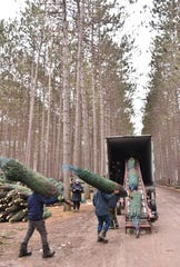 Dutchman Tree Farms near Cadillac — the state's largest Christmas tree farm — will ship more than 750,000 trees this year.
