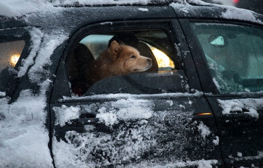 A dog pokes its head through an open window as snow falls in Duluth, Minn., Wednesday, Nov. 27, 2019. (Alex Kormann/Star Tribune via AP)
