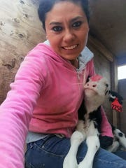 Farms recruit Mexican veterinarians for animal scientist jobs, but end up milking and cleaning