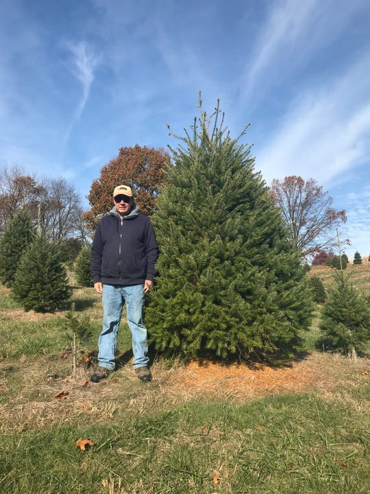 Denny Kauffman has been growing Christmas trees on his 12-acre lot since 1981. The man-made pine grove currently counts approximately 10,000 trees. Kauffman can barely keep up with the demand of his devoted customer base, some of which come as early as September to tag the tree they want for their home during the holidays.