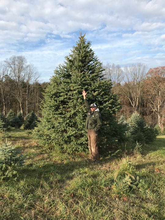 Jeff and Beth Hull have been growing pine trees at Cherry Run Farm across a 20-acre lot since 2002. The Hulls, with the help of their three daughters, are currently growing about 10,000 trees.