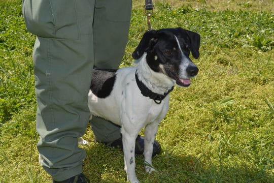 Rider is a 4-year-old hound-terrier mix that is based out of Montgomery County.