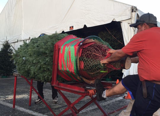 Workers at Heath Christmas Trees in Fort Myers prepare to package and load a tree in a customer's vehicle on Thursday, Nov. 28, 2019. This year's holiday shopping season is the shortest since 2013.