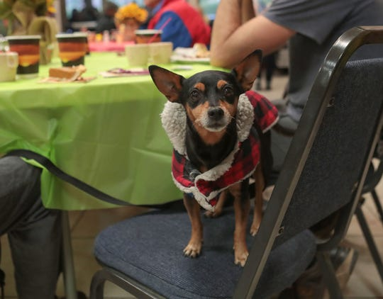 Dogs were allowed in with their owners during Well in the Desert's Thanksgiving meal service at Our Lady of Solitude Church in Palm Springs, November 28, 2019.