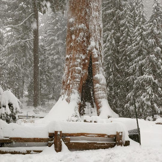 Sequoia National Park received 18 inches of snow overnight Wednesday after a holiday storm hit the Sierra and much of California.