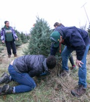 Cameron Stilson uses a reciprocating saw to cut down a balsam tree as 16-year-old sister Kennedy and dad Jon hold the tree. Mom Denise, at left, helped pick out the tree from Waldock Tree Farm in Iosco Twp. Friday, Nov. 29, 2019. The Stilsons are from Brighton.